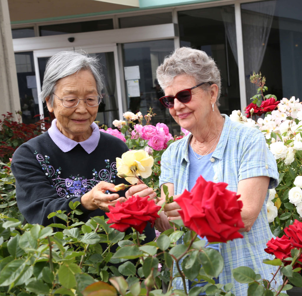 viewing flowers on the rooftop garden